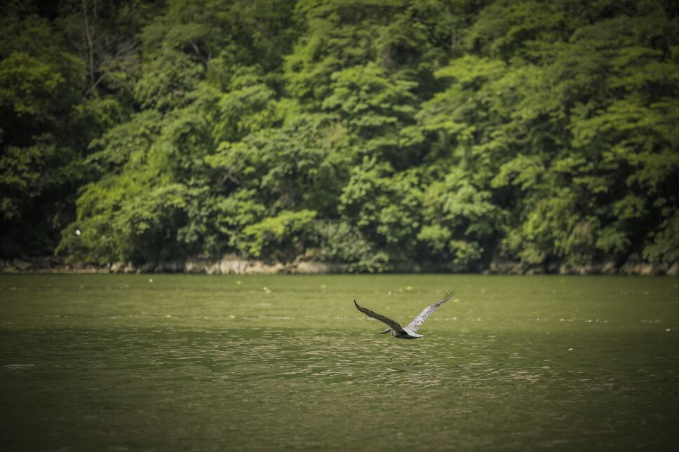 Aves en el Cañón del Sumidero