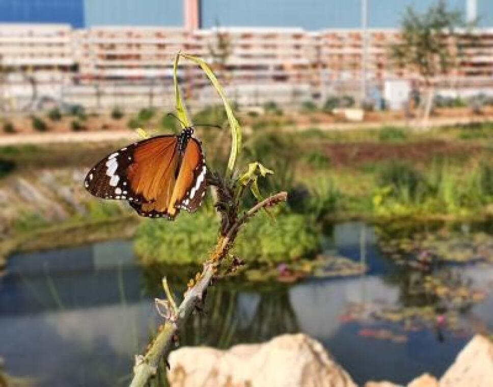 parque-de-mariposas-israel.jpeg