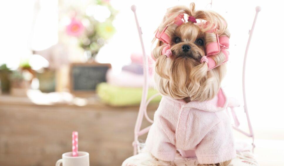 ¿Tratar a tu perro como hijo es tan malo como dicen?