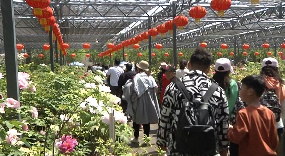 Jardín Internacional de peonías turismo.jpg