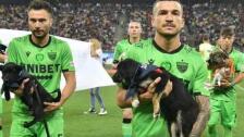 Rumania, adopción de Perros
