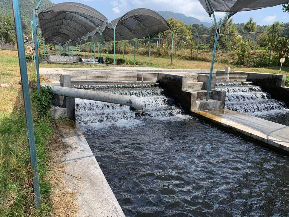 producción pescados y mariscos