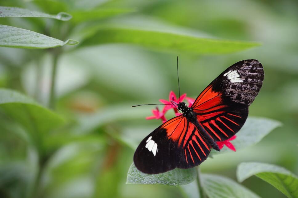 parque-de-mariposas-en-israel-mariposa-roja.jpg