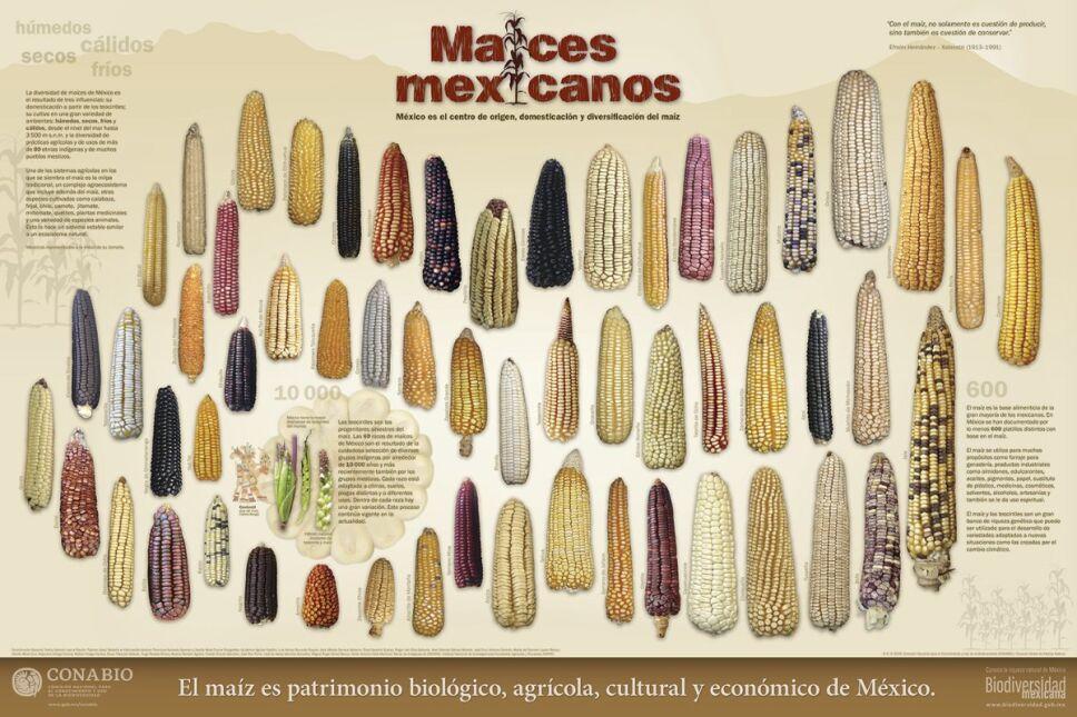 Maices mexicanos