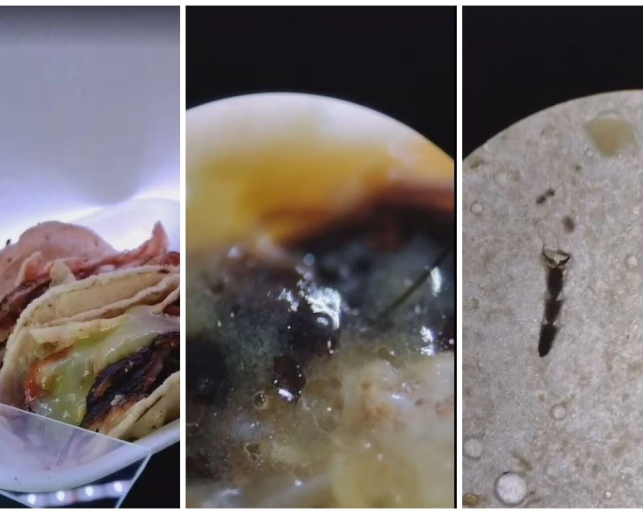 tiktoker-taco-microscopio