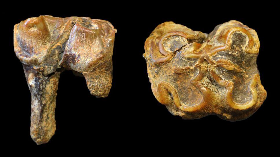 hipopótamos, Inglaterra, fósiles a.jpg