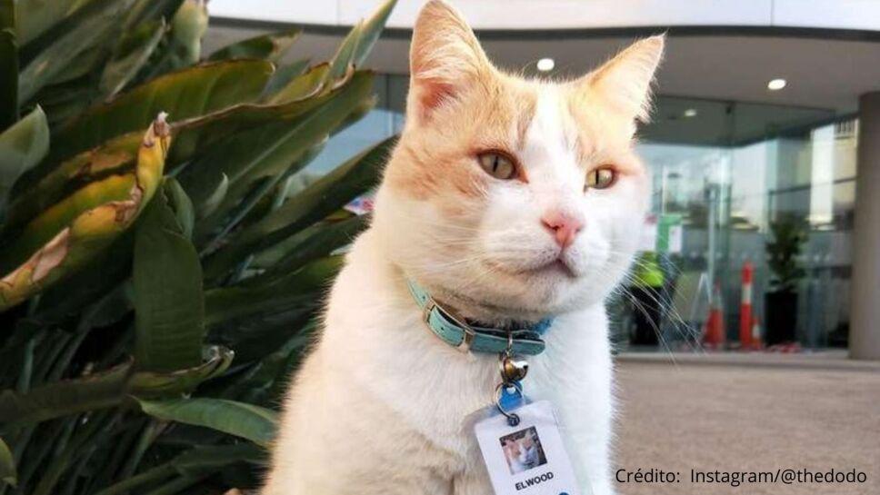 Gatito se convierte en guardia de seguridad de un hospital