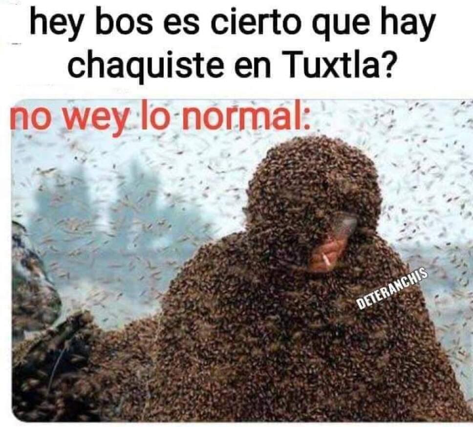 Plaga de CHAQUISTES en Tuxtla Gutierrez (1).jpg