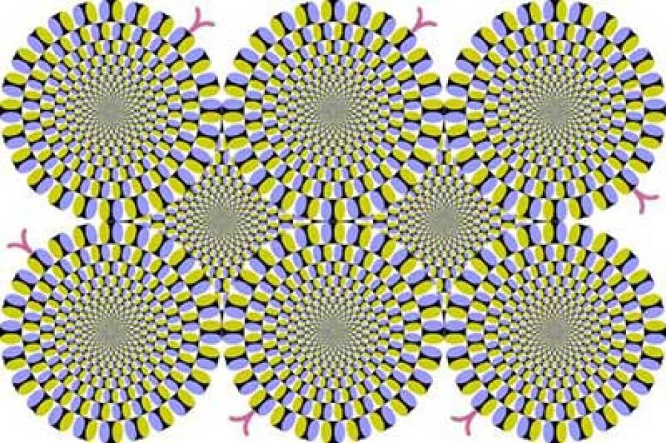Ilusión óptica, qué es, por qué.jpg
