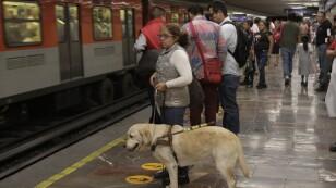 Inclusión animal en el Metro