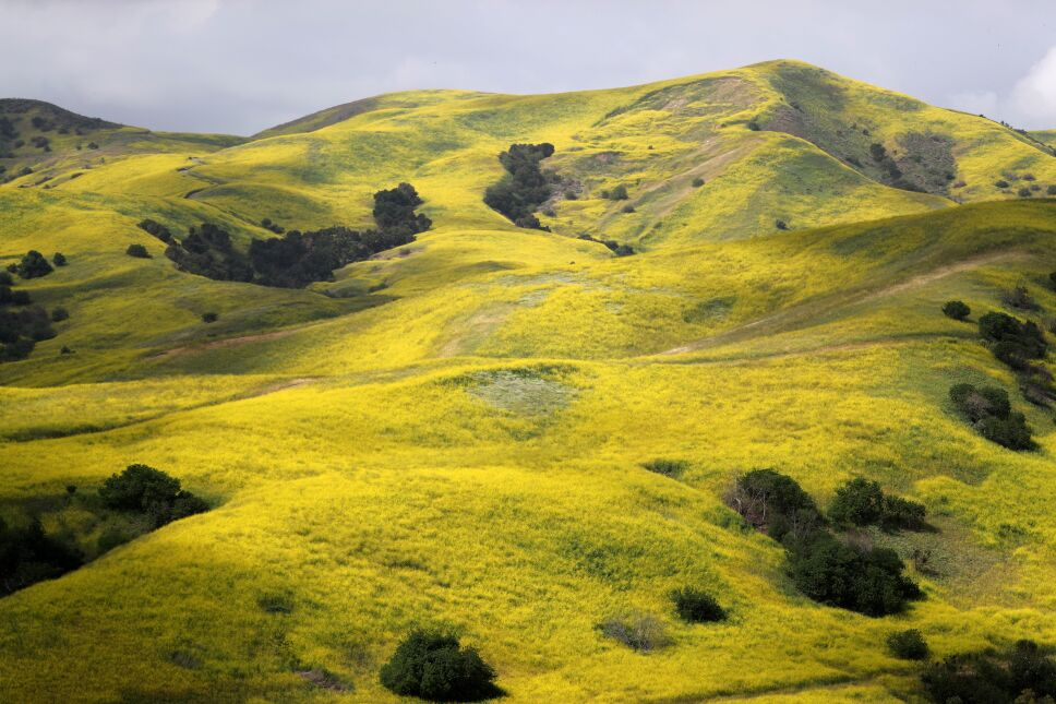 Exhibición de flores silvestres en California