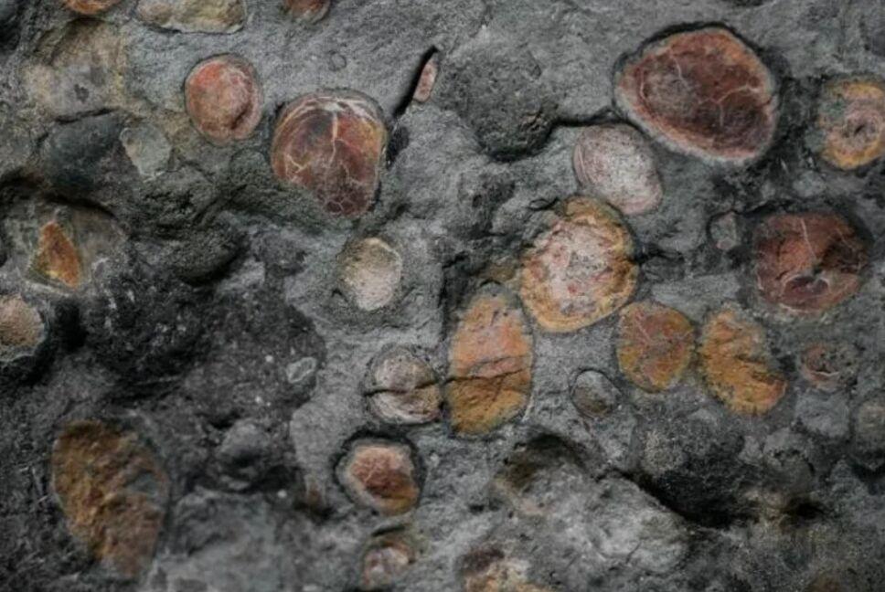 Fósil de dinosaurio.png