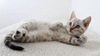 El arañazo de un gato puede ser más peligroso de lo que te imaginas
