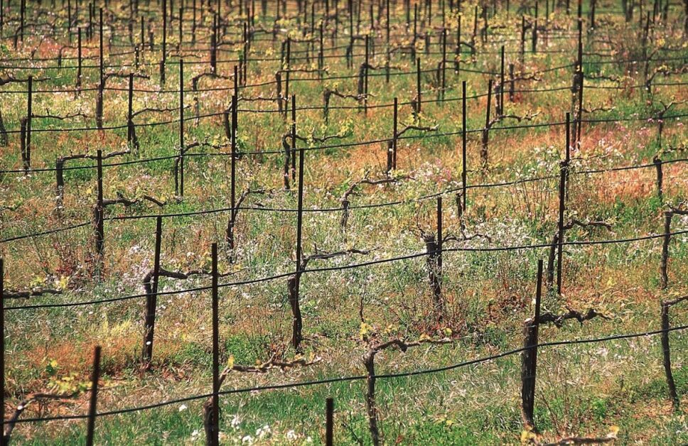 monte xanic viñedos