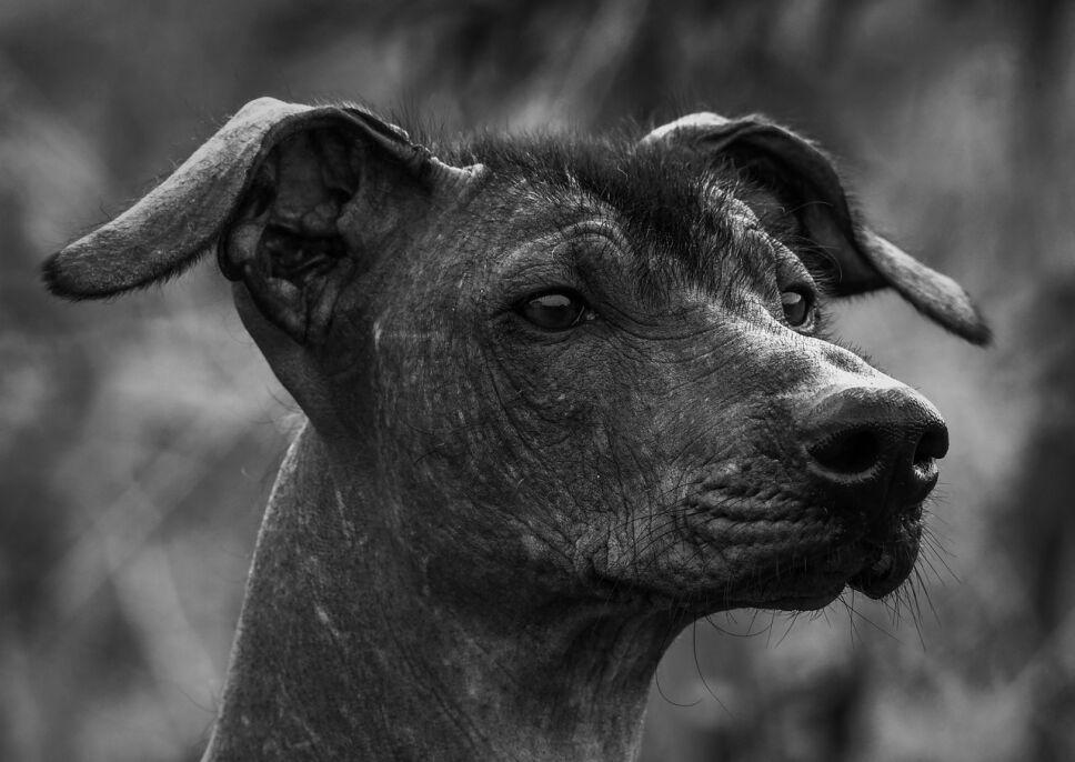 dog-6112872_1280.jpg