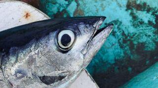 Mariscos y huesos de pescado no kosher, los alimentos de los judíos en la antigüedad