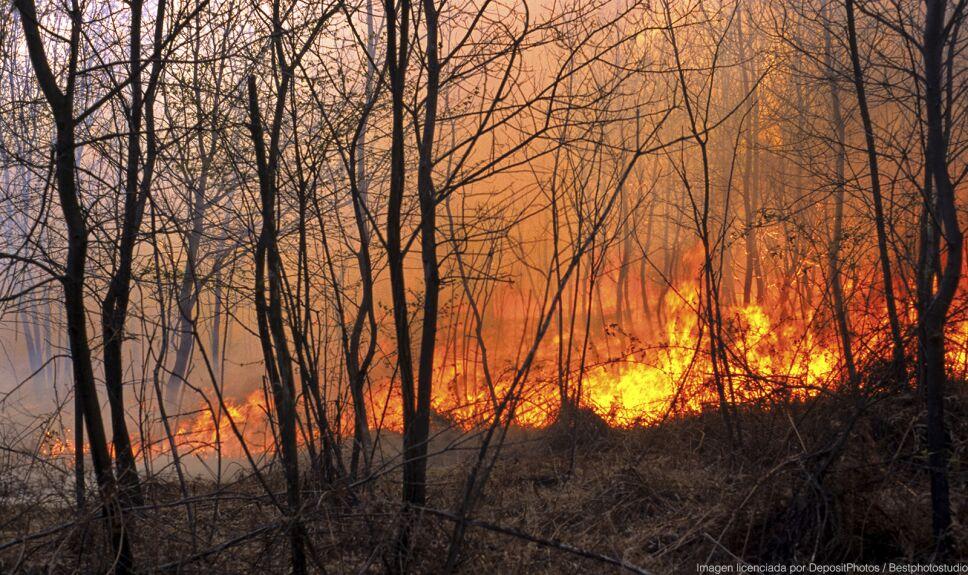 ddc fuego bosque