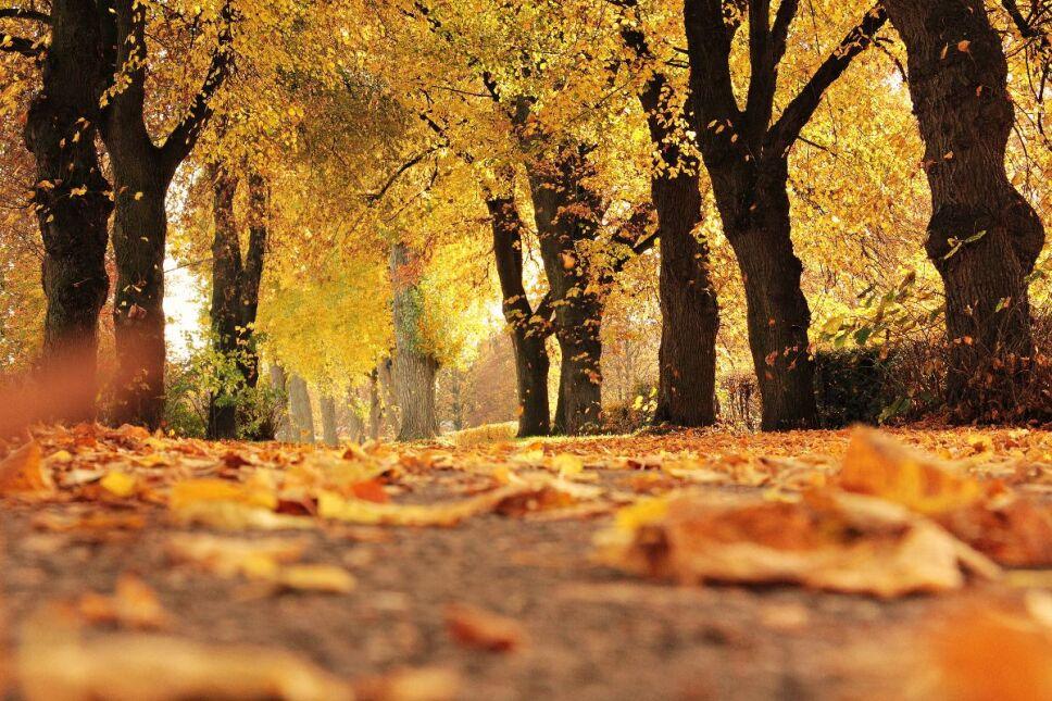 Cuándo entre el otoño
