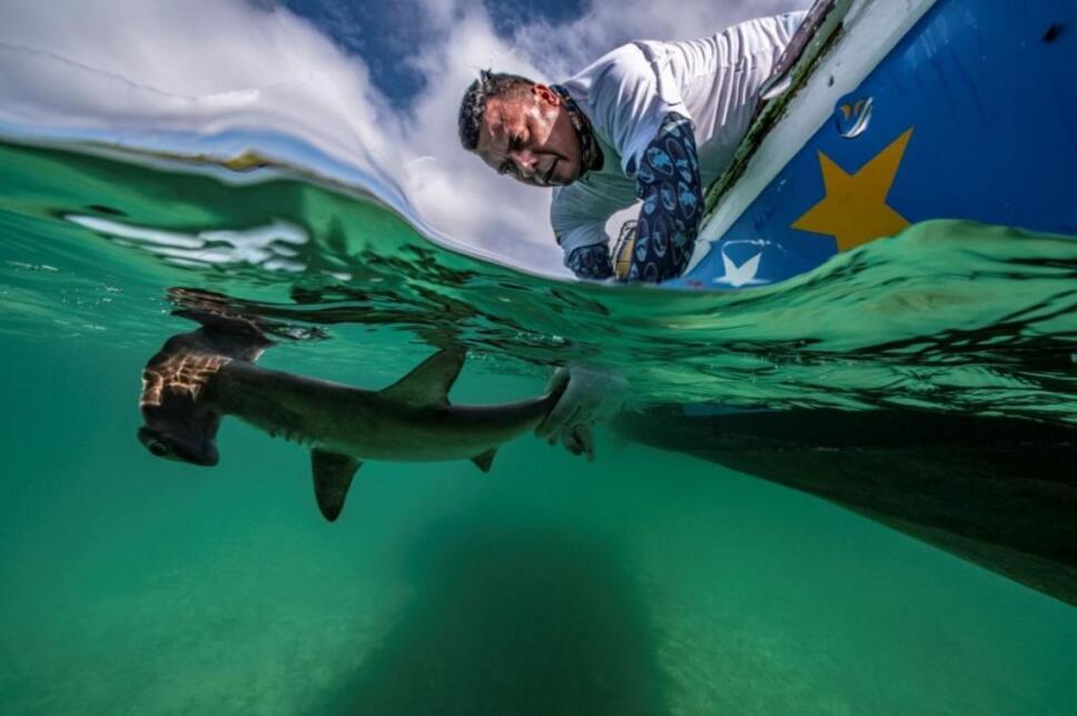 mundo-submarino-tiburon.jpg