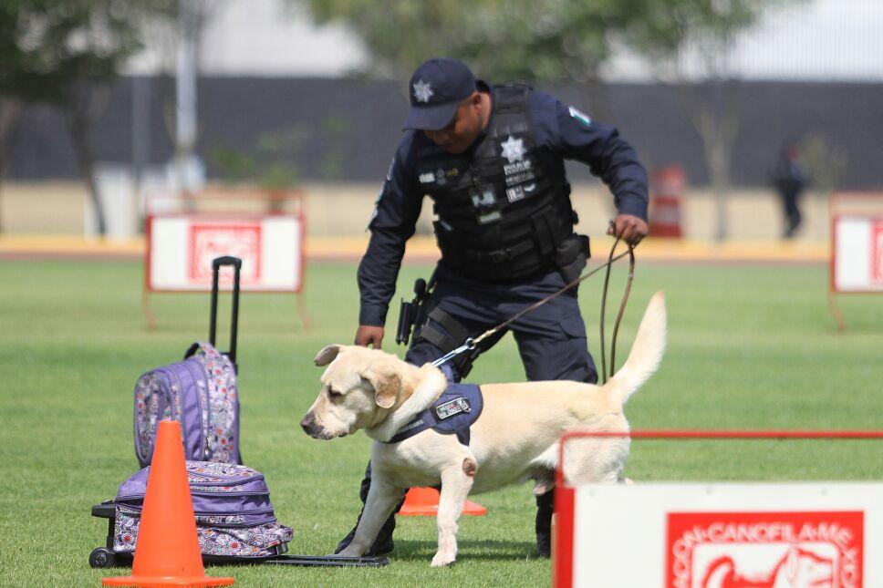 Unidad Canina de la Policía Federal cumple 30 años de servicio