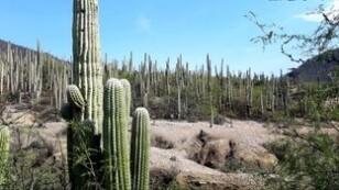 Declaran al Valle de Tehuacán Patrimonio de la Humanidad