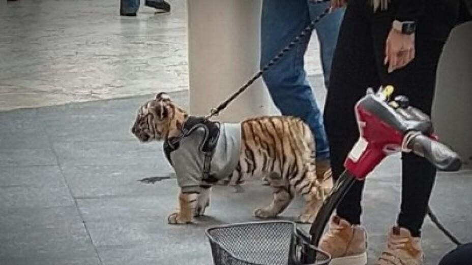 Tigre en Polanco