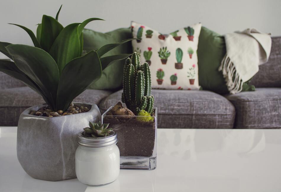 Las plantas, además de lucir hermosas, tiene propiedades que podemos disfrutar en casa. Por ejemplo, darnos frutos e incluso purificar el ambiente de la casa.