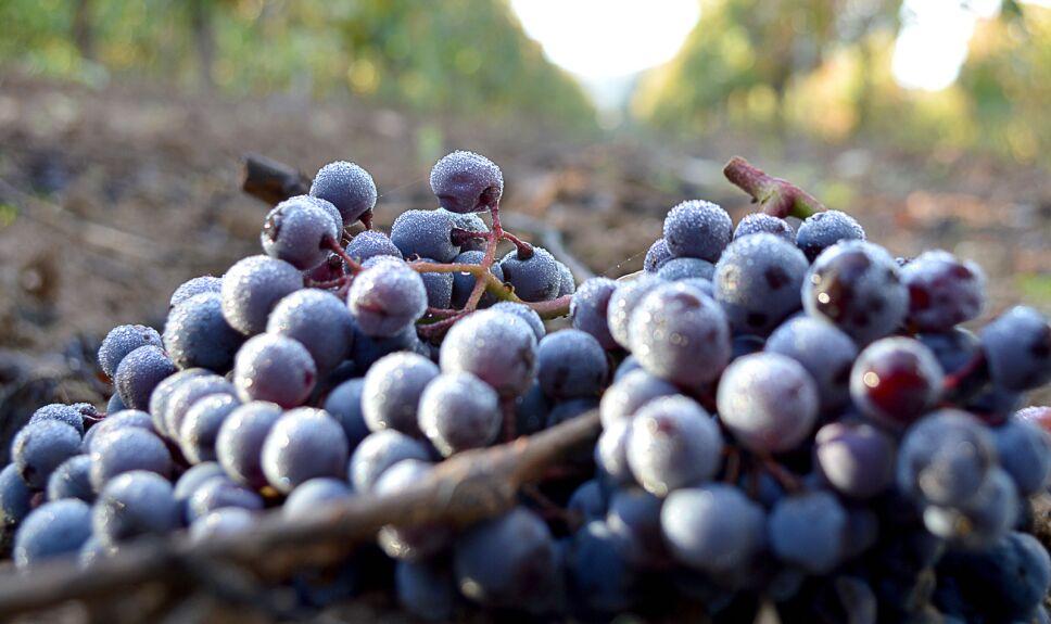 Pavo al vino tinto