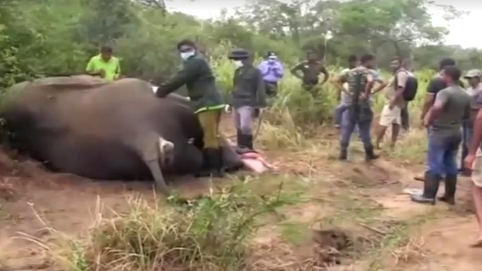 Elefantes en Sri Lanka