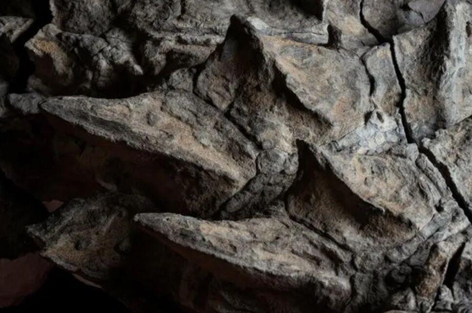 fósil nodosaurio.png