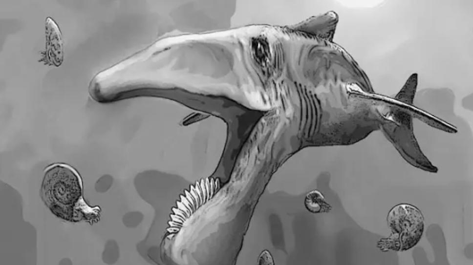 pez-dientes-de-sierra.PNG
