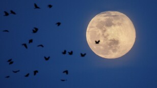 The Pink Supermoon is seen behind a flock of birds during moonrise, in Arlington