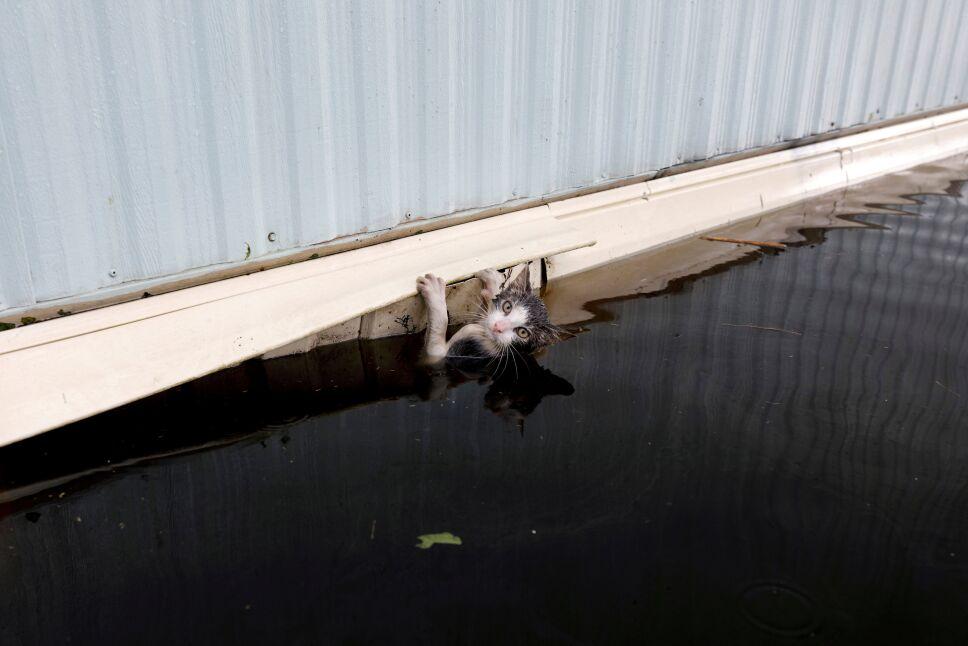 Inundaciones por Florence en Carolina del Norte
