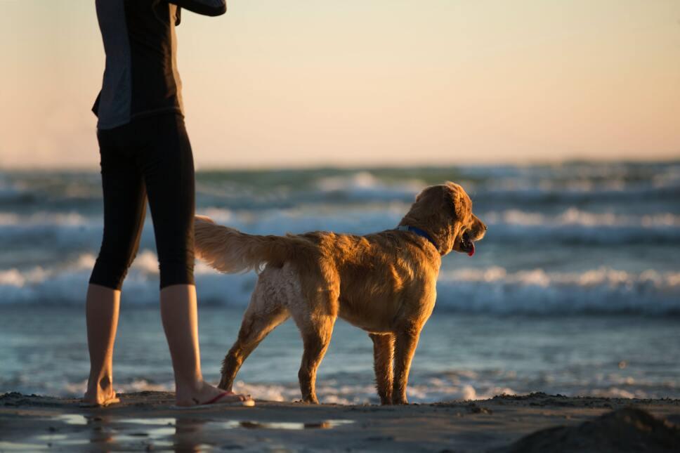 Playas para ir con tu mascota