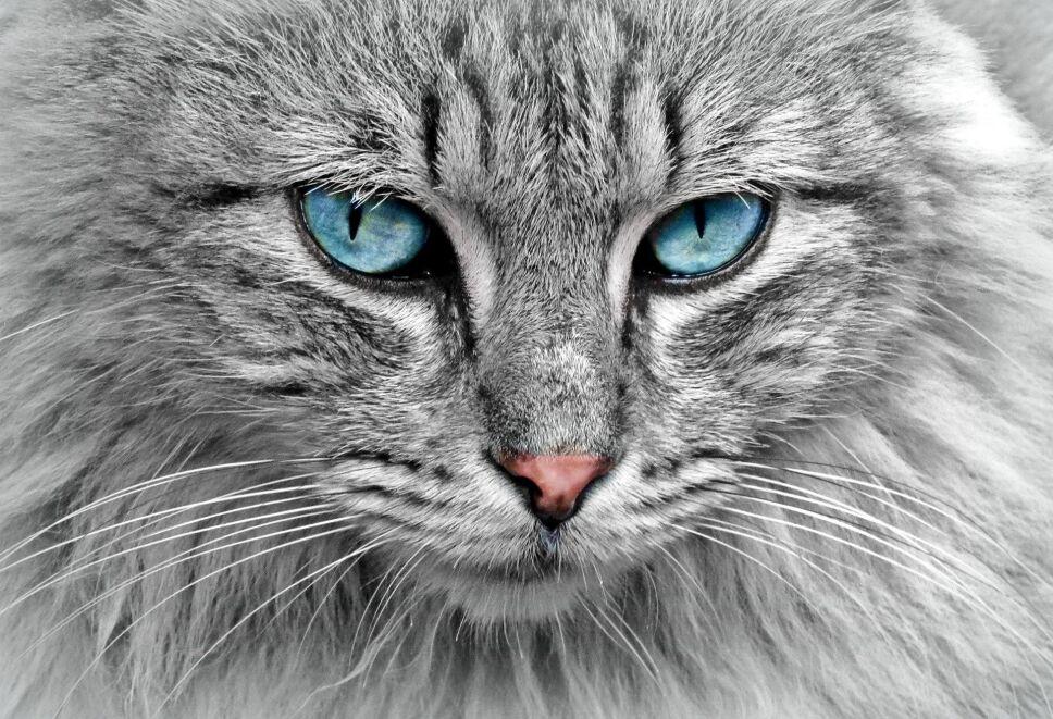 cat-g4c13be4c2_1920.jpg