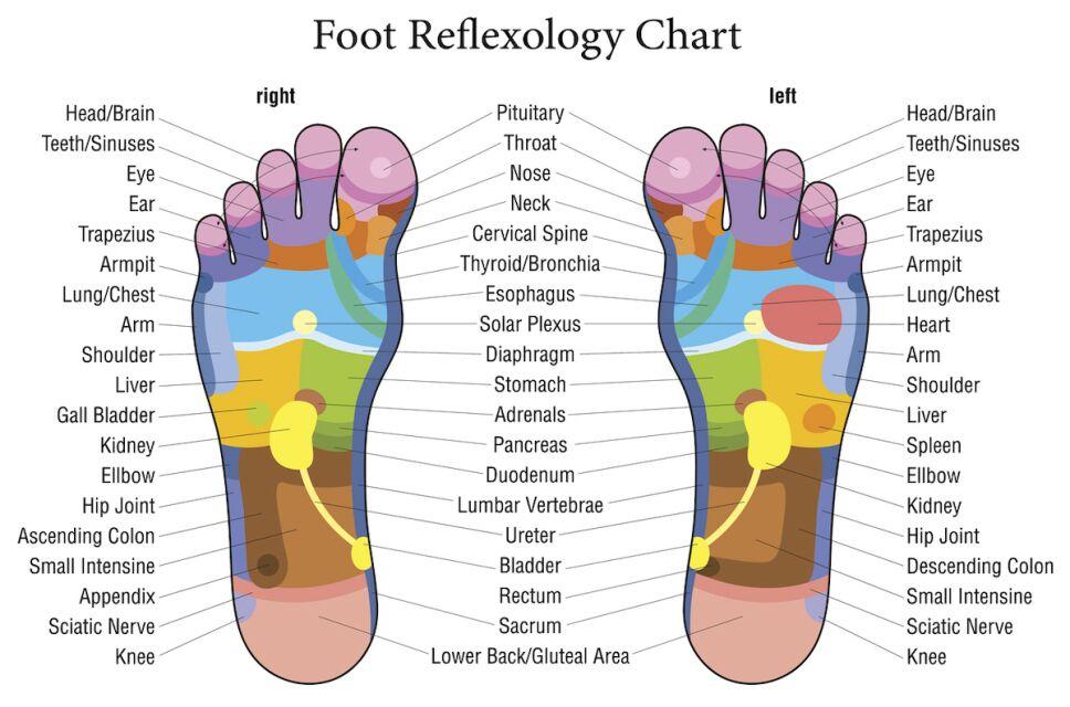 mapa de reflexologia de los pies
