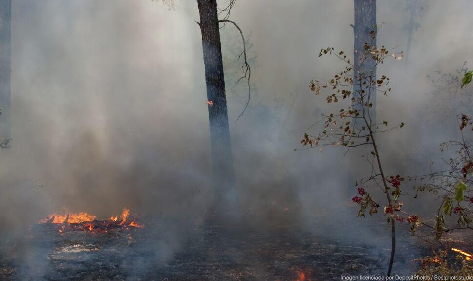 ddc humo fuego bosque