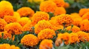 flor de los 20 pétalos