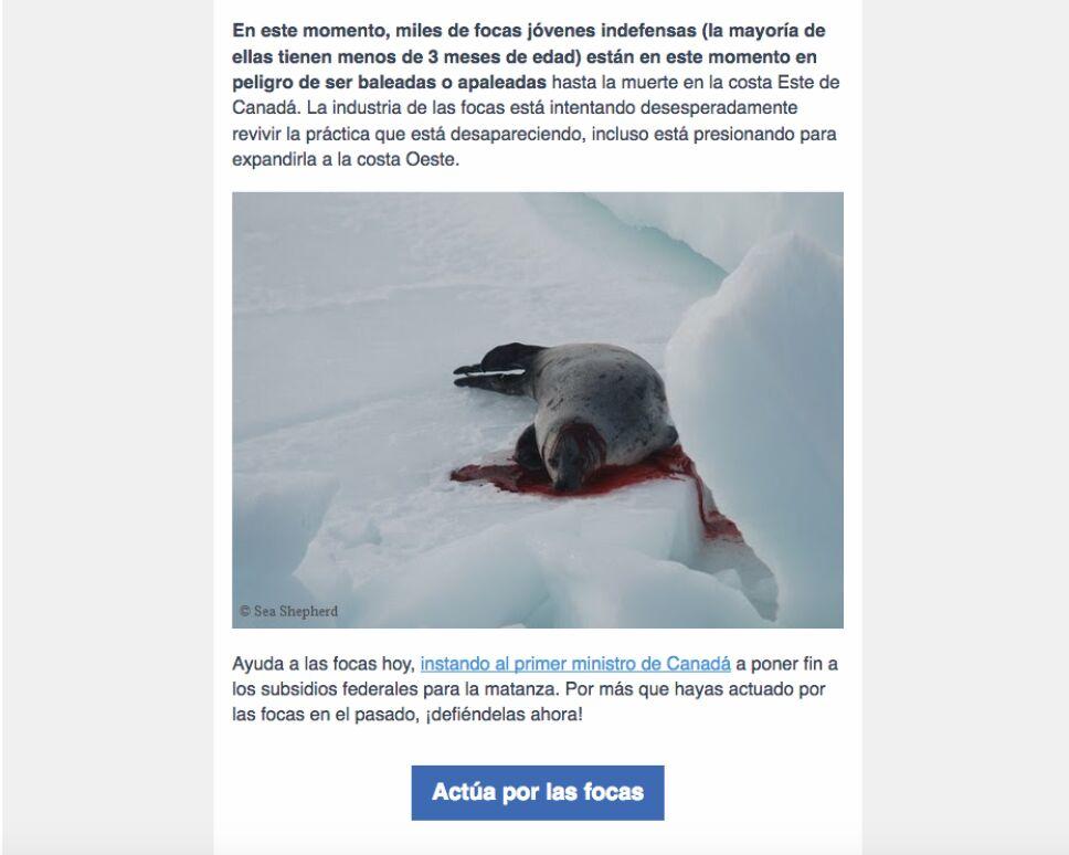 En peligro miles de focas bebé, podrían morir baleadas o apaleadas