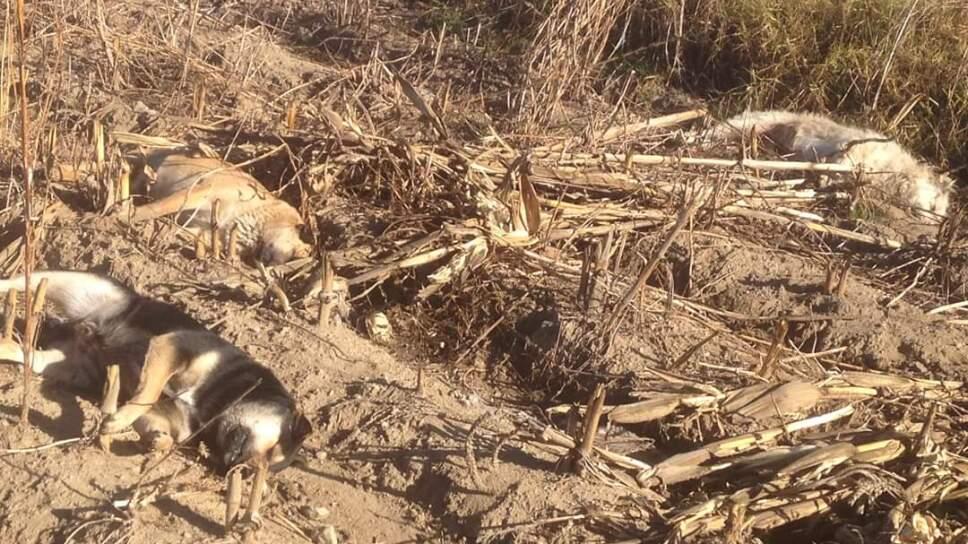 VIDEO | Envenenan a más de 60 perros en Puebla