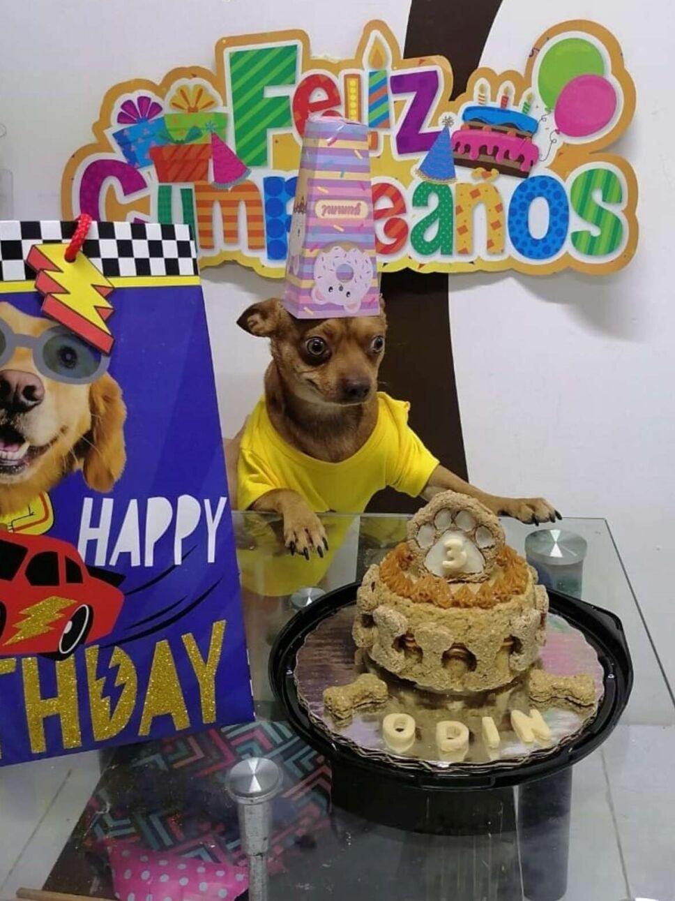 Perrito en fiesta de cumpleaños.jpg