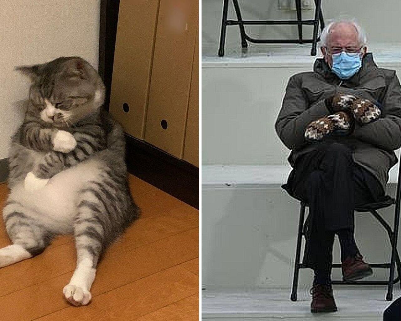 gatito_memes