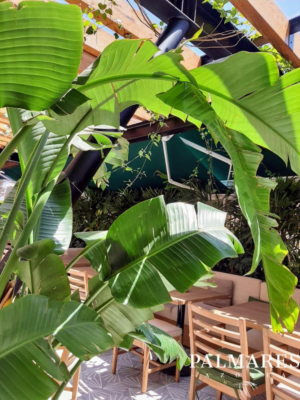 restaurante azotea palmares cdmx