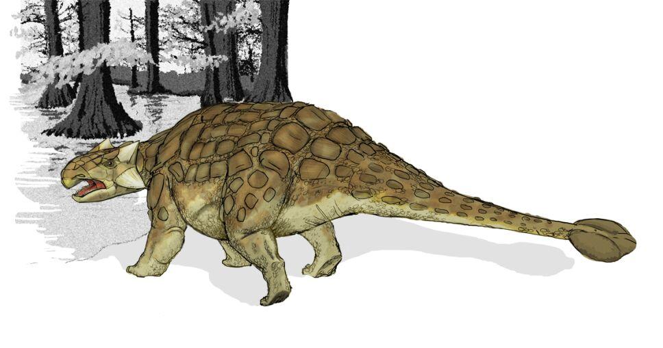 Dinosaurio, armadura, especie a.png