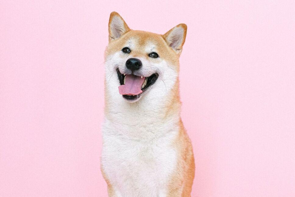Señales que indican que tu perro es feliz a tu lado