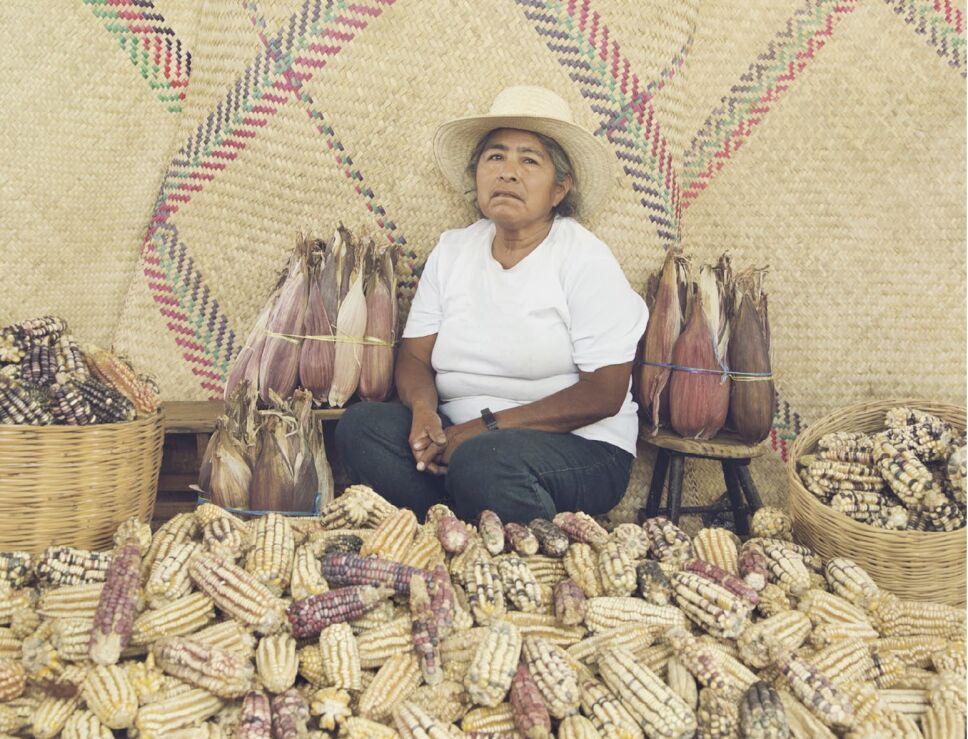 maiz arte oaxaca