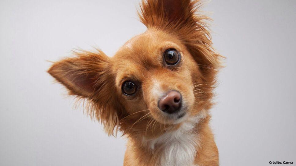 6 juguetes y premios para perros.jpg