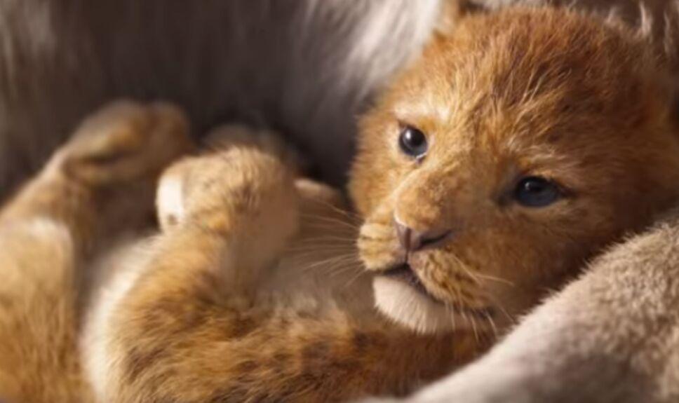 comparacion rey leon kidsiete