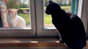 Foto de archivo. Un gato negro doméstico mira a un gato por la ventana, en el pueblo de Blecourt, durante el aislamiento impuesto para disminuir la tasa de propagación de la enfermedad por coronavirus (COVID-19) en Francia.