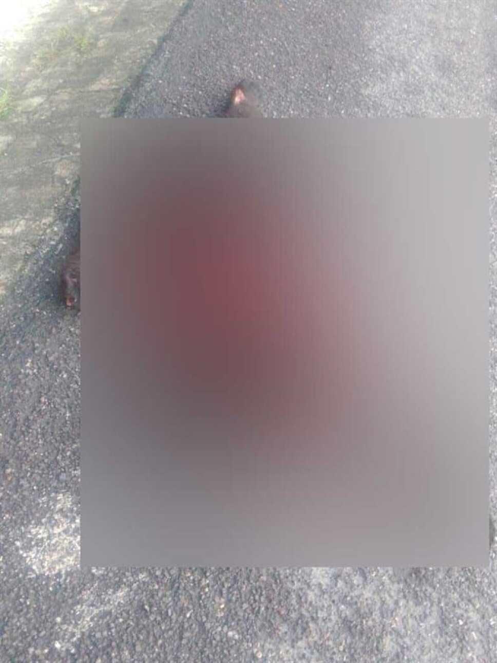 Muere oso atropellado en la Carretera Nacional